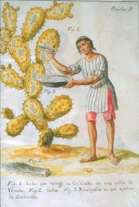 Indian Collecting Cochineal with a Deer tail